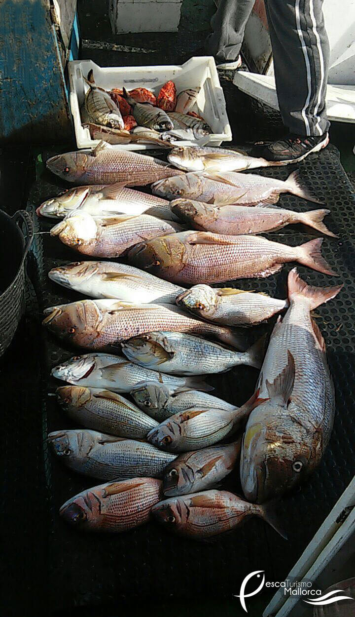 fishingtripmajorca.co.uk boat tours in Majorca with Marivent Cuarto